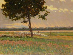 le troupeau en Provence